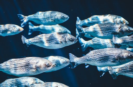 school-of-fish.jpg