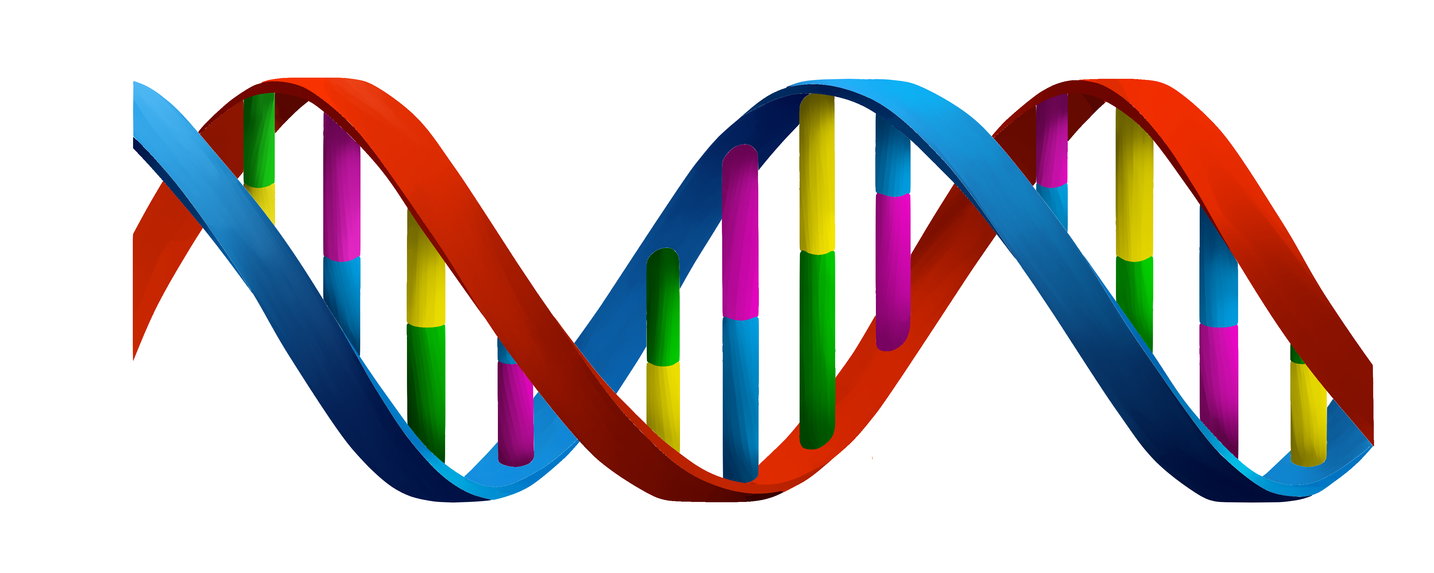 dna helix.png