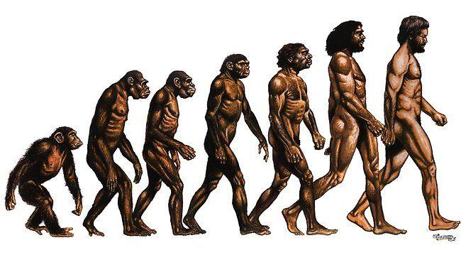 Evolution Graphic