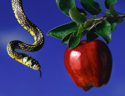 original-sin-apple