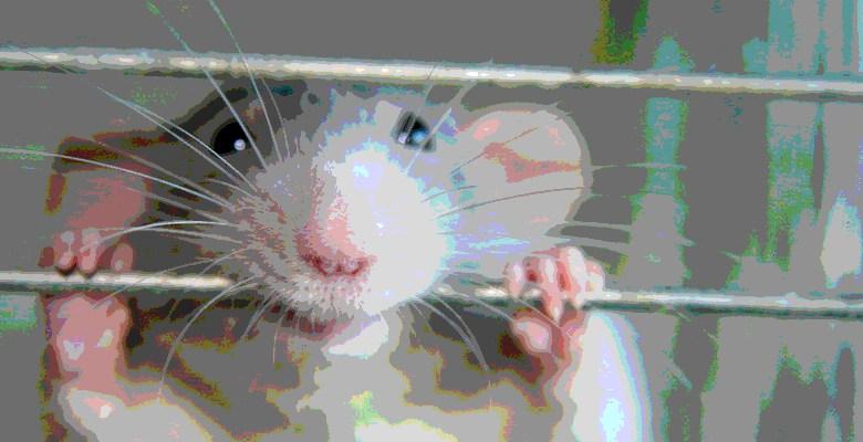 ratsmiling2.jpg