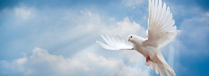 Sanctification Dove.jpg